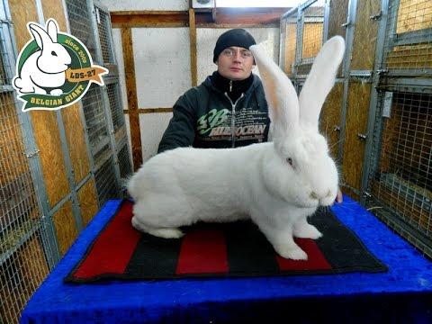Особенности содержания кроликов в Краснодарском крае - YouTube
