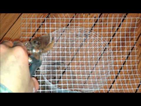 How To Make A PIN FISH TRAP (bait Trap)
