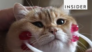 The Internet Can't Get Enough of These Pets