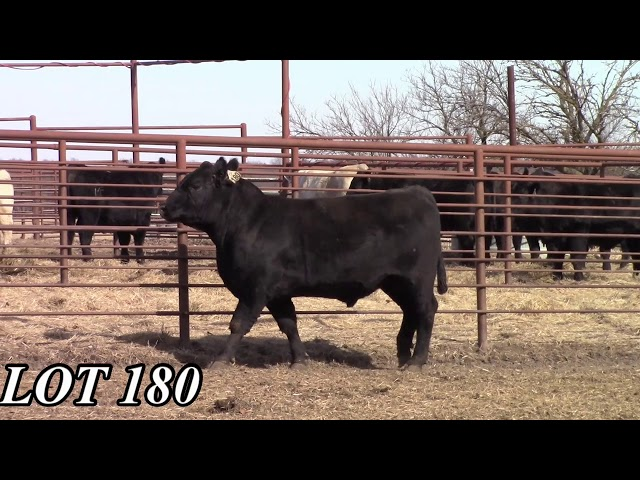 Mead Angus Farms Lot 180