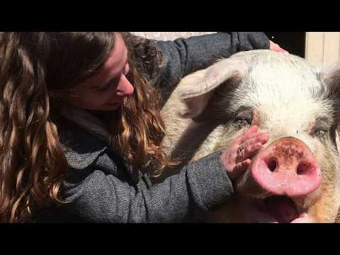 Thumbnail: 16 Year Old Girl Saved This Pig's Life 3 Years Ago. Their Reunion Will Touch Your Hearts