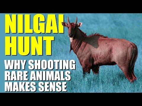 Fieldsports Britain - Why shooting rare animals can make sense (episode 217)