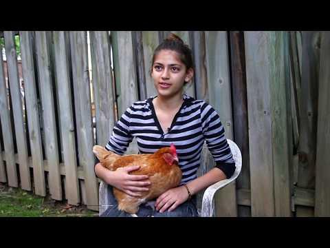 Raising chickens makes GTA teen a high school celebrity