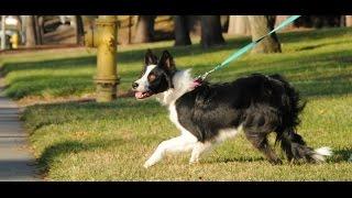Dog Training - Training The Shy Or Fearful Puppy Or Dog