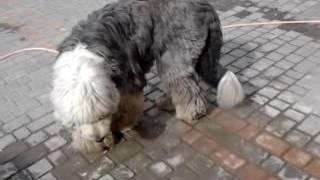 Интересная большая собака