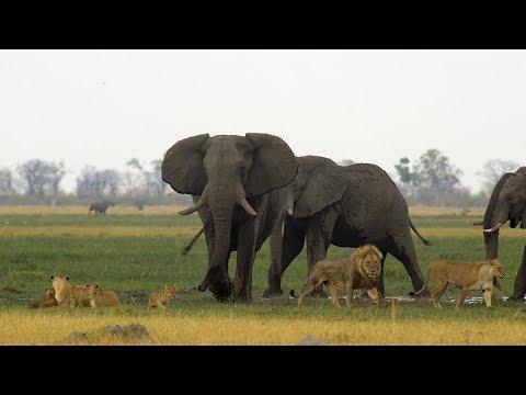 Sonido de animales salvajes de África