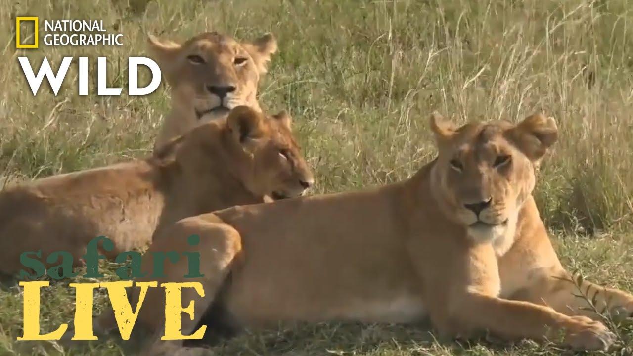 Safari Live - Day 200 | Nat Geo Wild