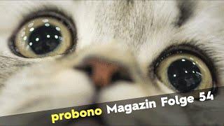 probono Magazin Folge 54: Unglaublich - Clooney baut Mist!