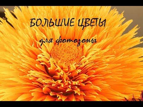 Цветы из гофрированной бумаги. Ростовые гигантские цветы для фотозоны. Георгины. Астры