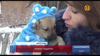 Волонтеры просят не дарить собак на Новый год