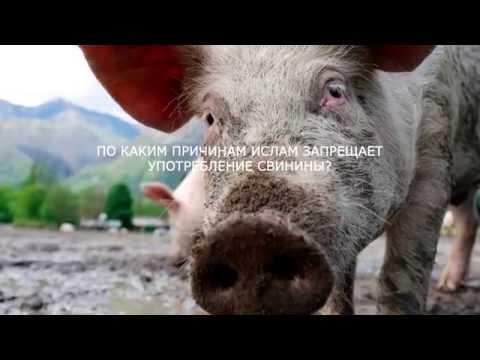 Почему христианам вначале было запрещено есть свинину, а