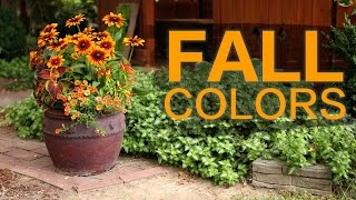Late Summer/Fall Container // Garden Answer