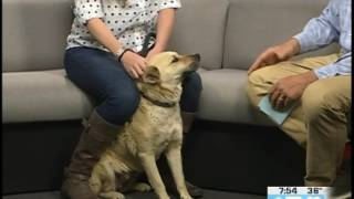 Eagle County Animal Shelter Rhiannon Rowe & Vixen  05.02.17 Good Morning Vail