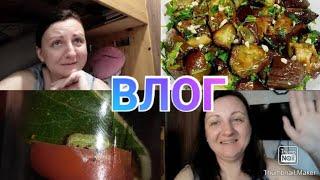Влог / Заморозка овощей / Наш питомец /  Баклажаны как грибы / Как мы живём в маленькой квартире?