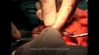 Dr. Scissor hands