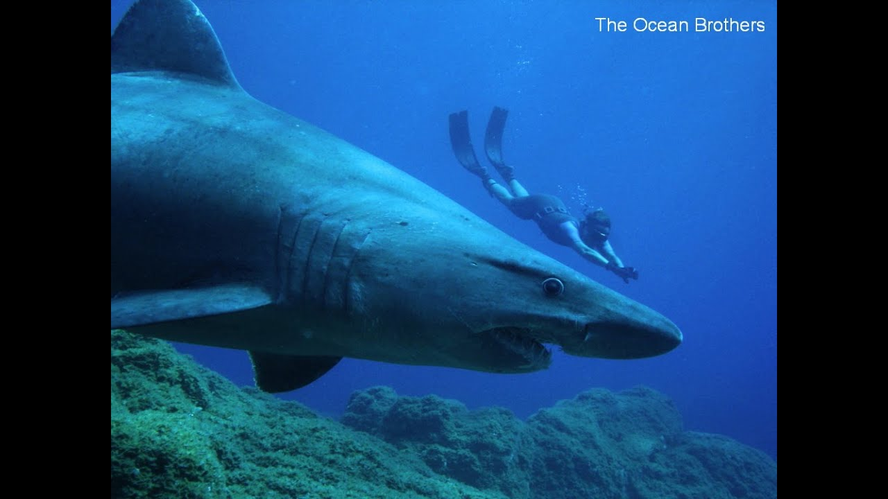 Sharks on the Canary Islands - Species of Shark in the Fish