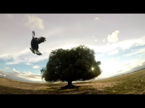 I Believe You Liar - by Megan Washington - Lonely 100 Year Old Olive Tree in the Middle of Nowhere