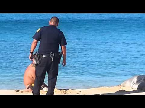 HPD cop beats man harassing monk seal
