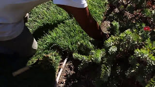 How to Install Sod