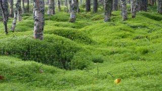 Экологическая игра викторина «В гостях у леса»