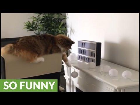 Cat shamelessly knocks over light bulbs, feels no remorse