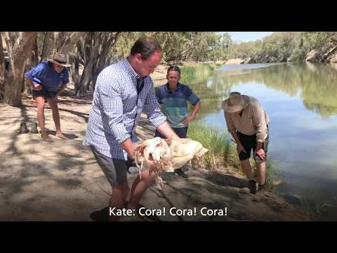 The Full Retch: Behind-the-scenes On The Darling River With The Mass Fish Kill