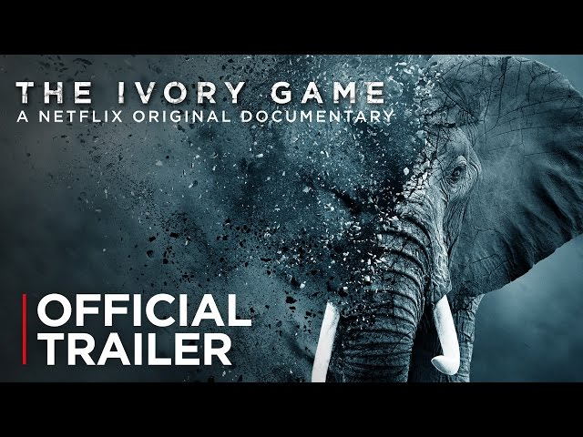 2a7dbe09638094 The Ivory Game review – timely account of elephants  death throes ...