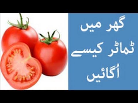 Kitchen Garden - How to Grow Tomatoes | #LifeSkills TV