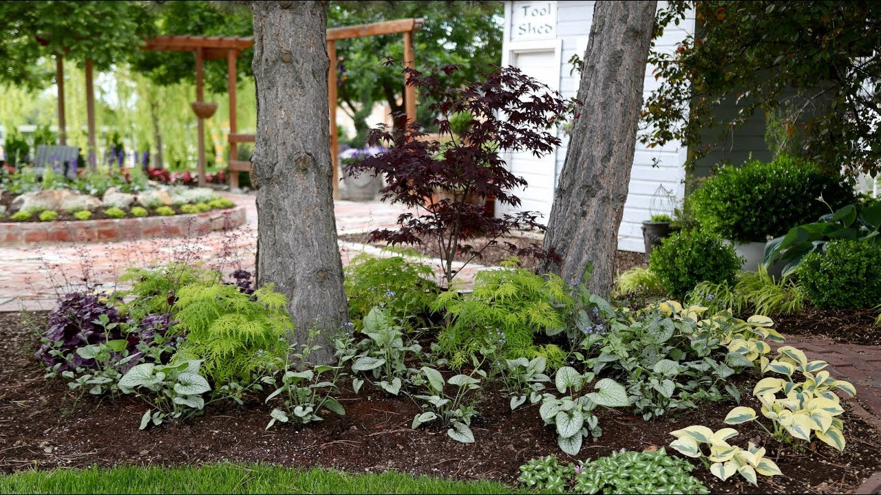 Beautiful Foliage Plants For Part Shade Garden Answer