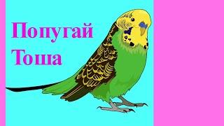 Урок музыки для попугая Тоши//Волнистый попугай//Птицы