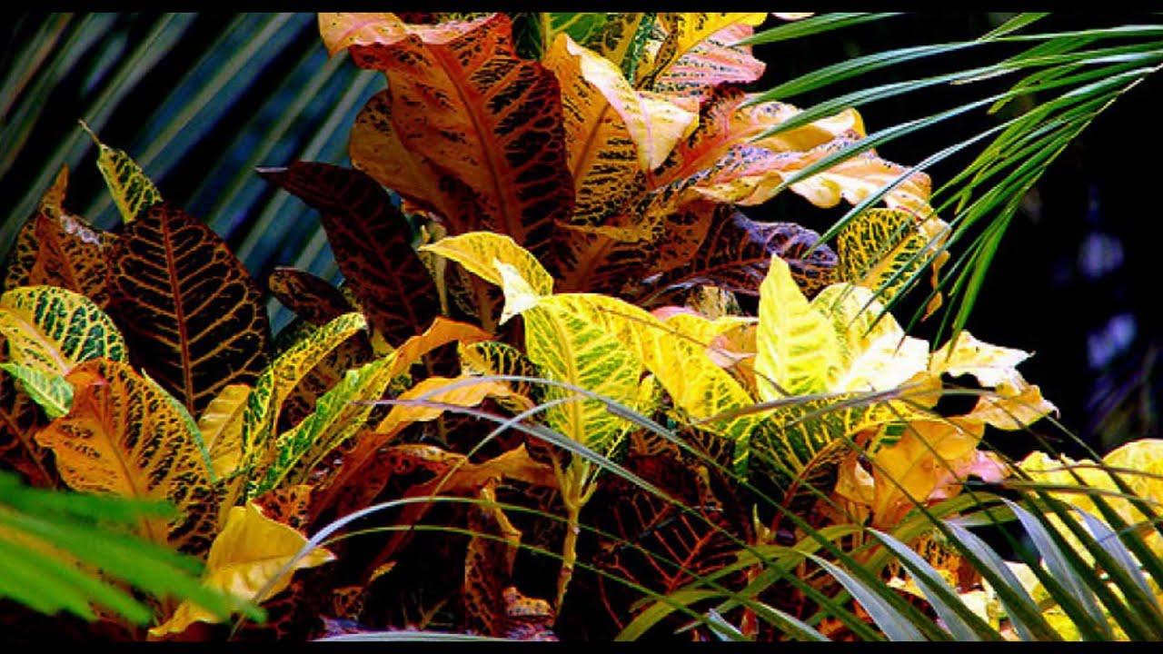 Plantas sin flor youtube for 5 nombres de plantas ornamentales