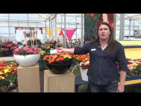 Spring Trials 2015: Florist Holland