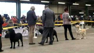Boston Champ Show 2009 Labrador Dog Cc Judging