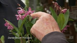 Australian Native Orchids at Australian Orchid Nursery