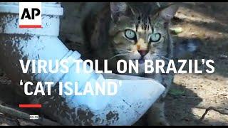 Virus' cruel, unexpected toll on Brazil's 'Cat Island'