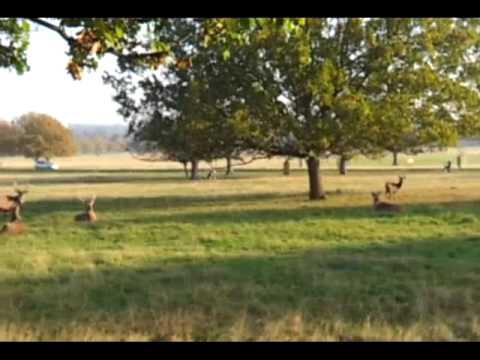 כלב רץ אחרי להקת איילים