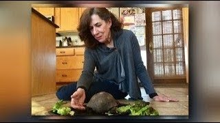 10-year-old girl keeps same pet tortoise 56 years