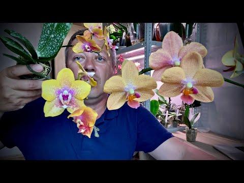 ОРХИДЕИ АРОМАТНОКРАСОЧНЫЕ распаковка посылки орхидей 03.06.2020