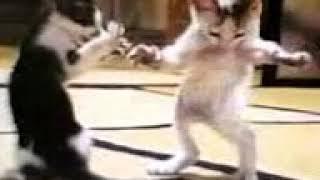 طب هزة يمين😍، طب هزة شمال😍، اول لما البنت تتعلم الرقص 😄😄