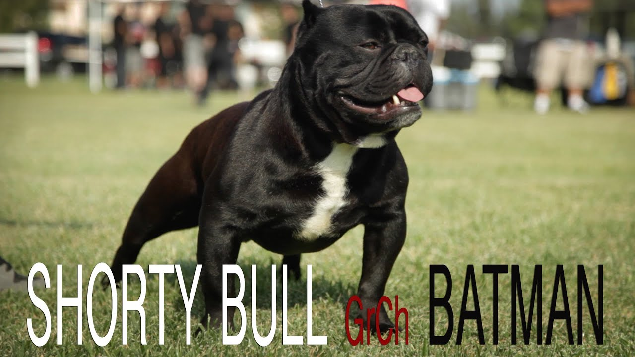 SHORTY BULL - BATMAN - YouTube