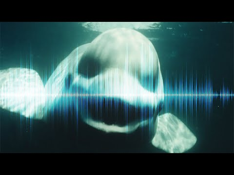 5 CREEPIEST Underwater SOUNDS Ever Recorded