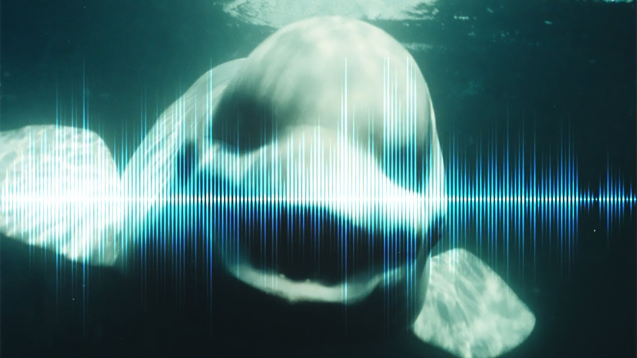 5 creepiest underwater sounds ever recorded youtube publicscrutiny Images