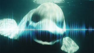 5 CREEPIEST Underwater SOUNDS Ever Recorded thumbnail