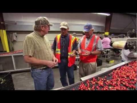 Washington Cherry Harvest - America's Heartland