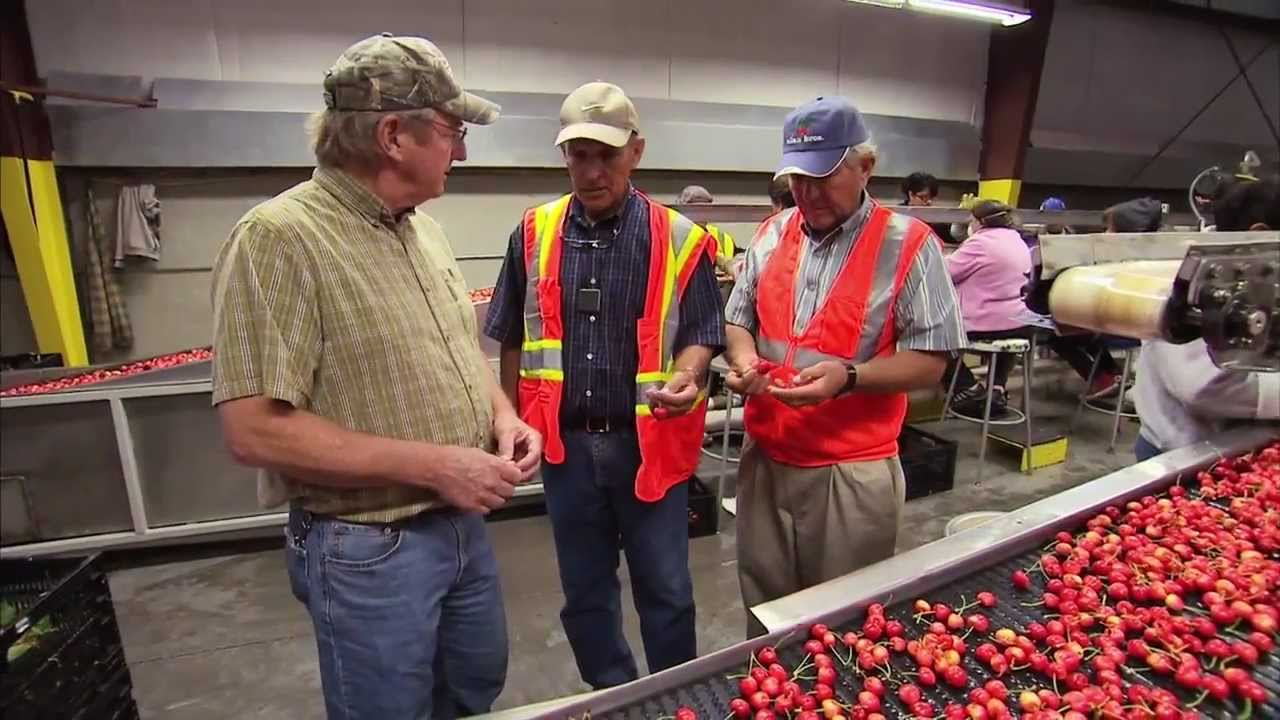 Washington Cherry Harvest America 39 S Heartland Youtube