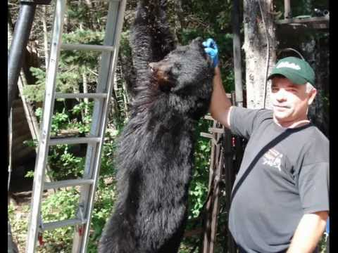 Blackwater Outfitters | Maine Bear Outfitters | Maine Black Bear Hunting