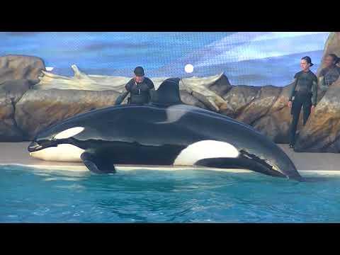 Orca Encounter (Full Show) April 6, 2018 - SeaWorld San Diego