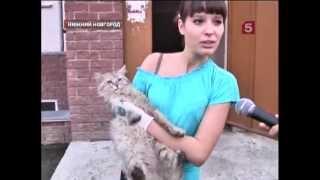 В Нижнем Новгороде спасатели вызволяли из плена кошек