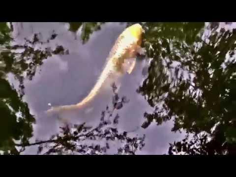 Lindo Lago do Amor Alexandre Pires