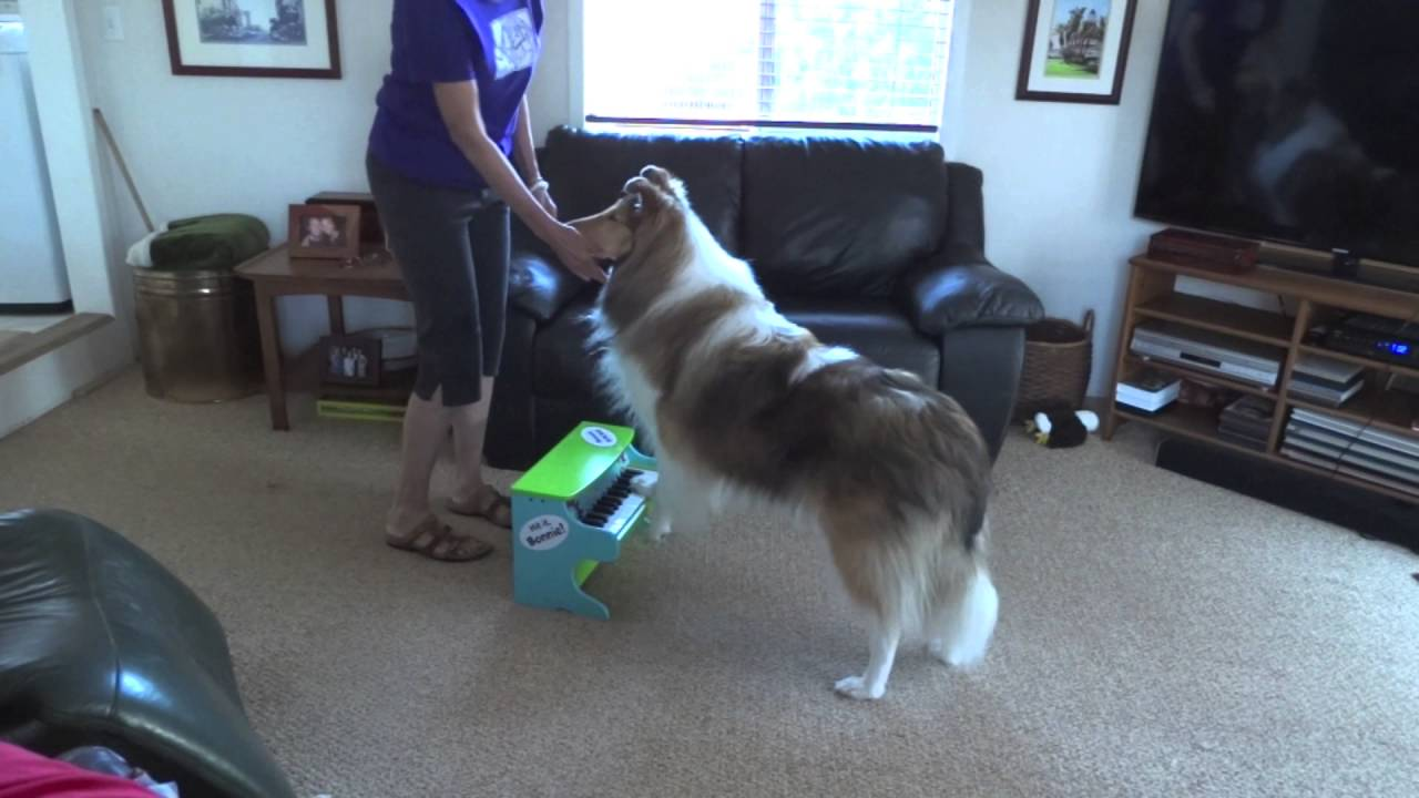 how to teach your dog to play